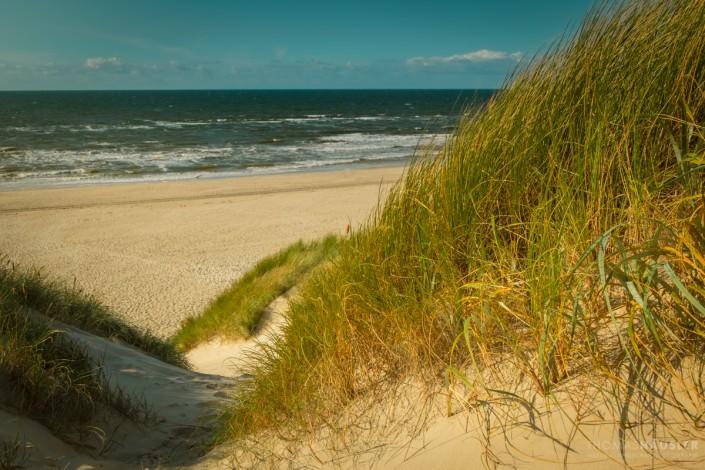 dänemark Durch die Dünen zur Nordsee